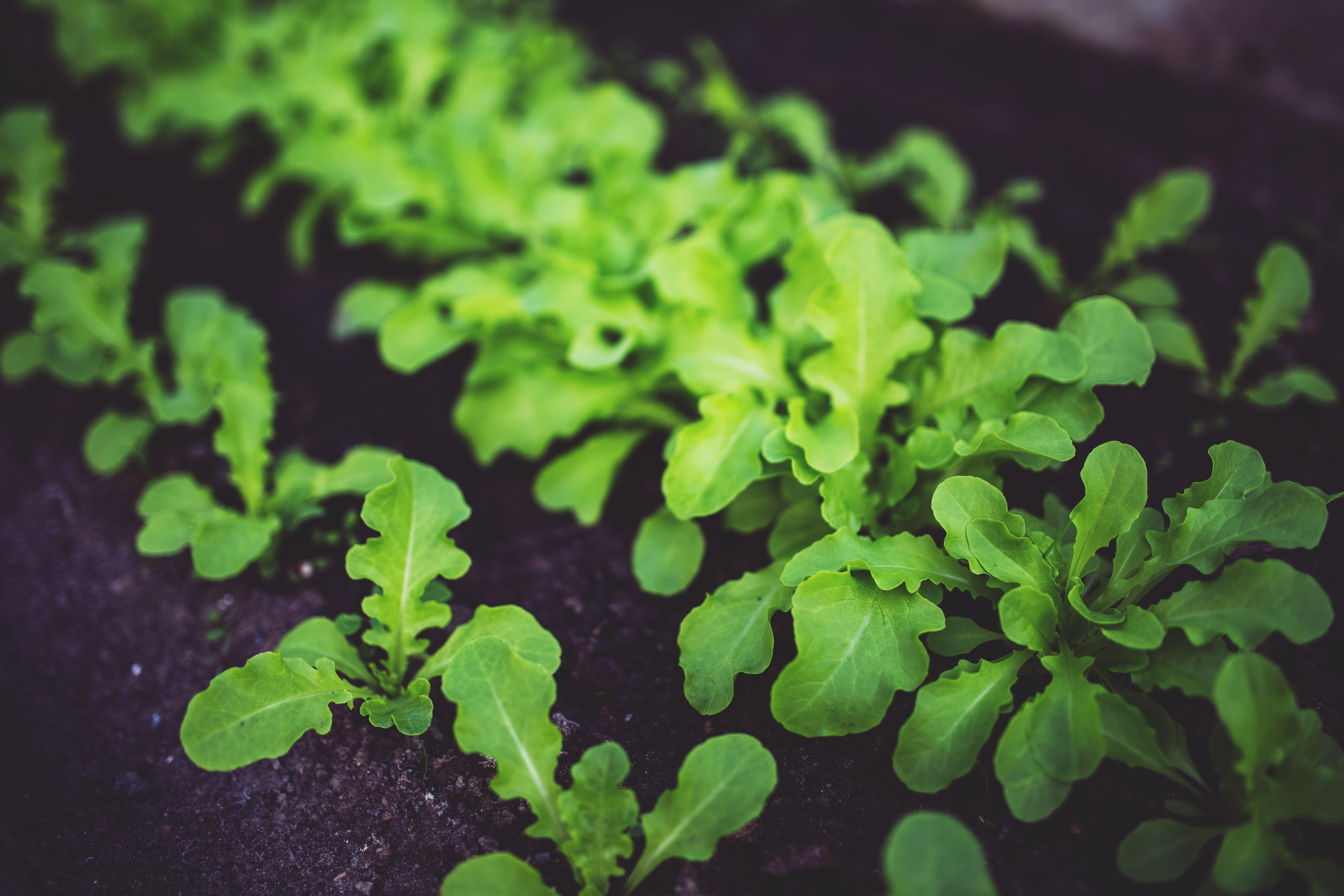 Ecogastronomía, la nueva marca que premia a los restaurantes sostenibles