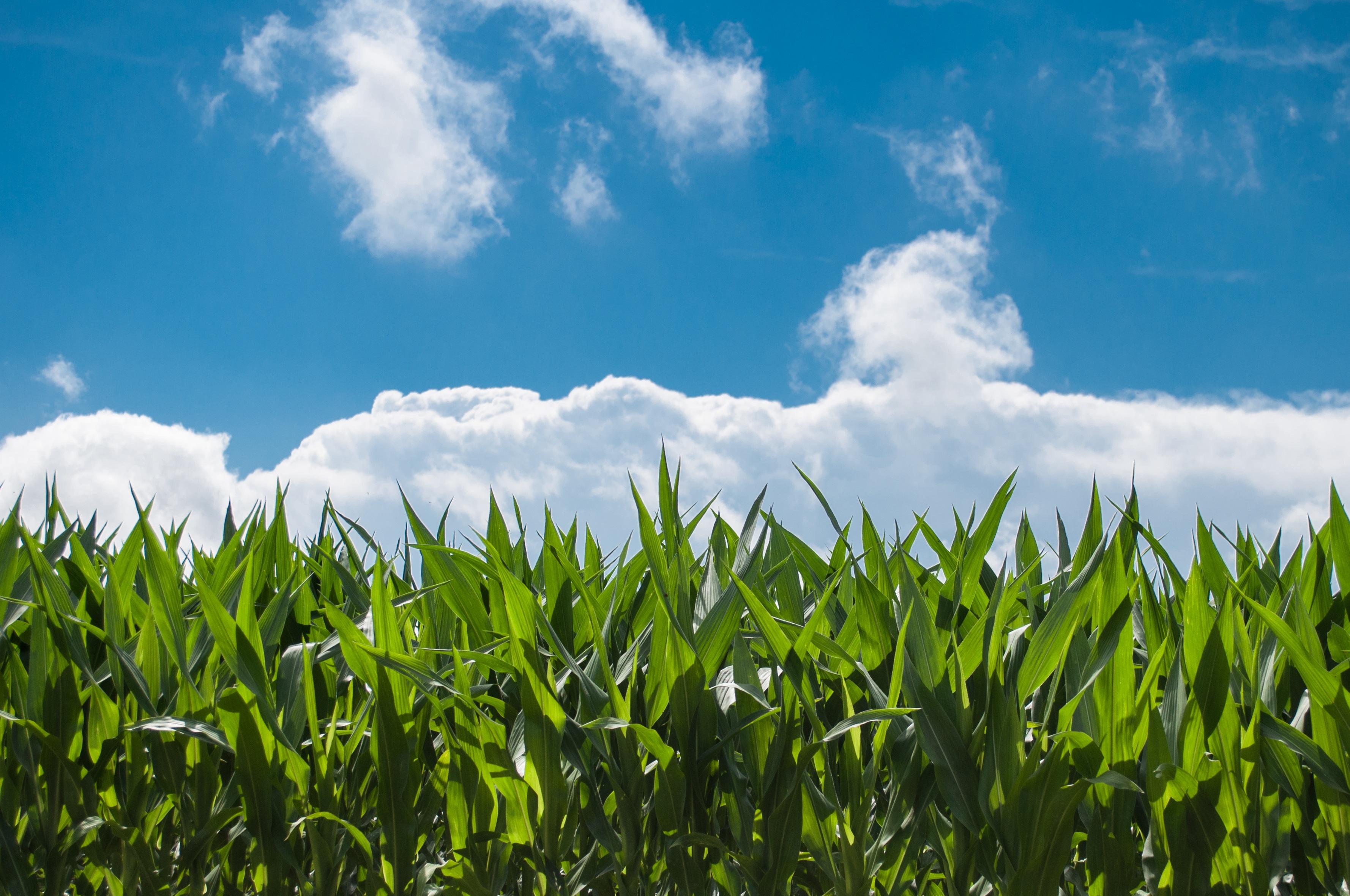 Aumenta el autoabastecimiento alimentario en Canarias